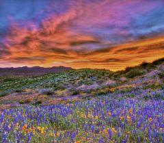 879px-San_Carlos_wildflowers,_2010